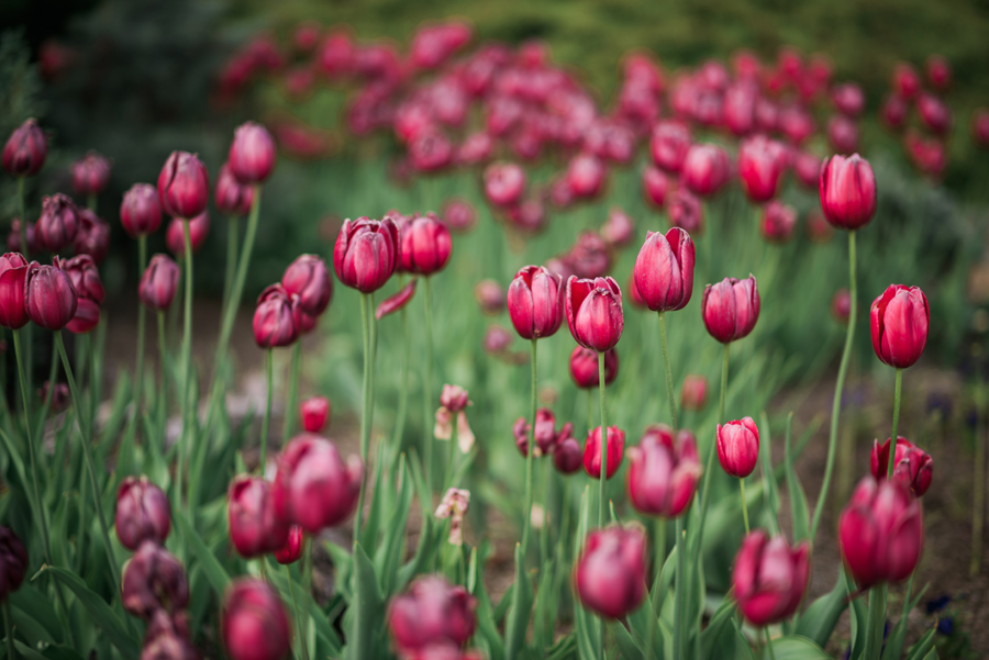 best flower fields of instagram, tulips // Notjessfashion.com