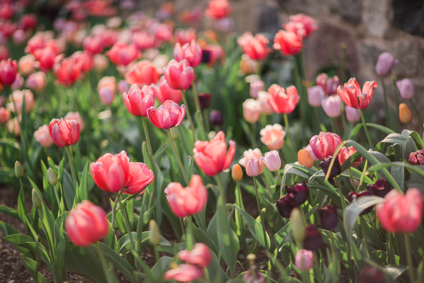 best flower fields of instagram, MOTHERS DAY, GIFT ,EVENING, SANDALS, NOTJESSFASHION, NYC, Top Fashion Blogger, Lifestyle Blogger, Travel Blogger // Notjessfashion.com