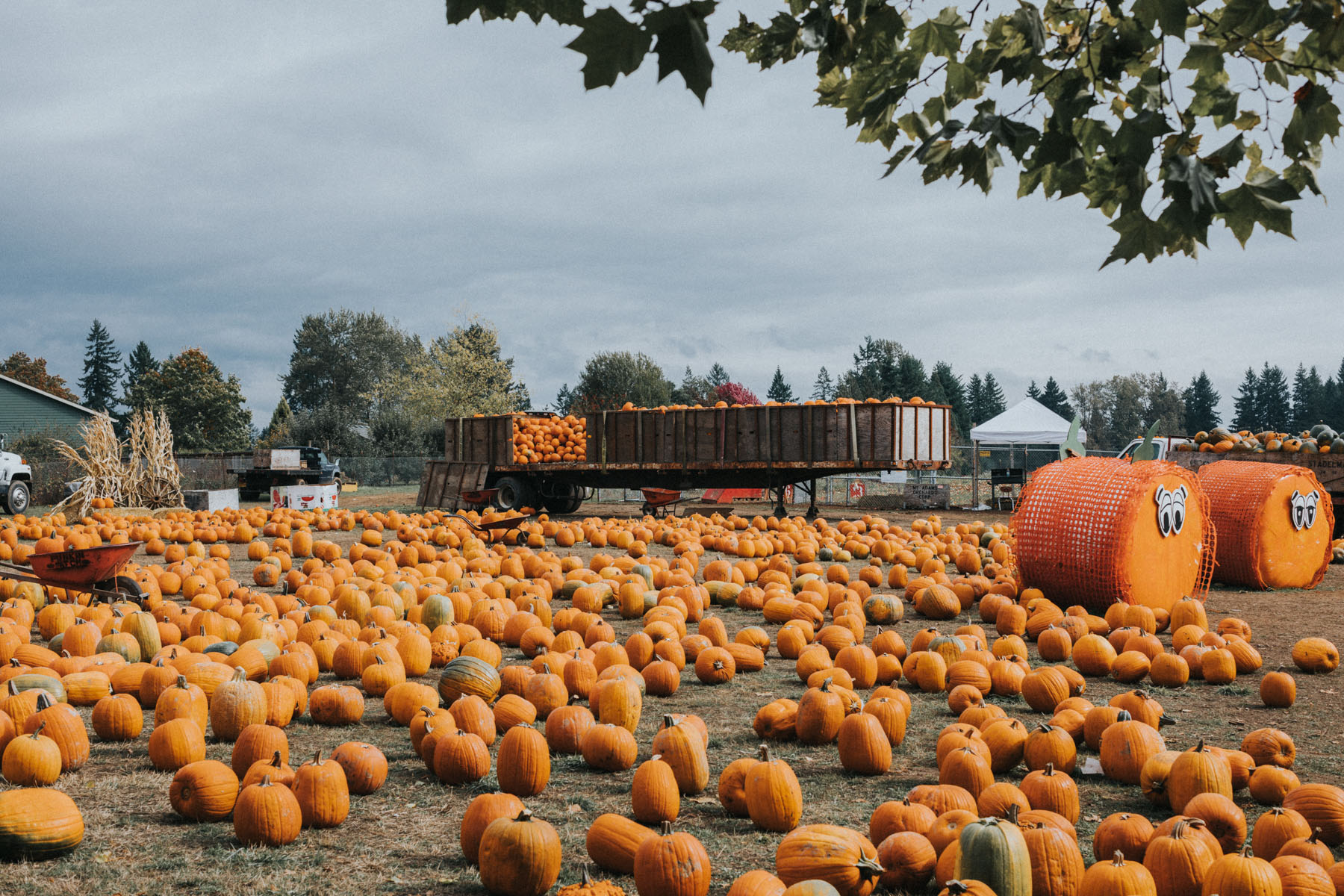 Pumpkin Patch Kids // NotJessFashion.com