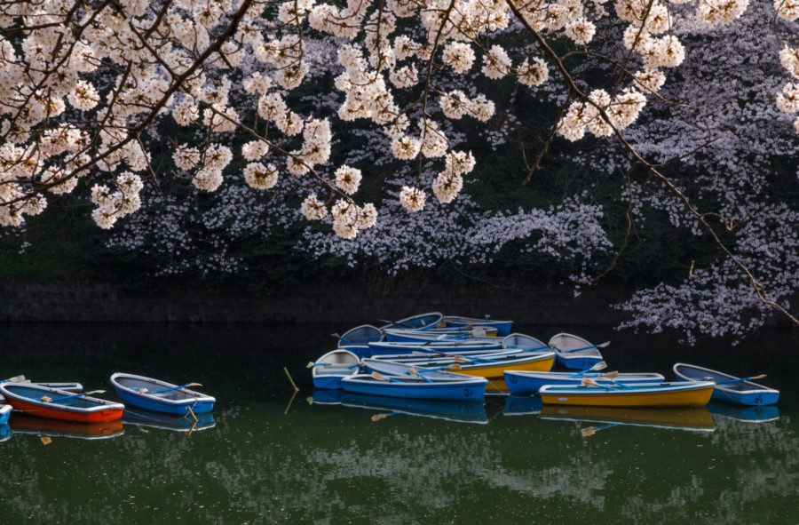 7 Best Spots for Cherry Blossoms in Japan - Tokyo - Boating in Chidorigafuchi, luxury travel blogger // Notjessfashion.com