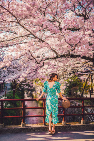 7 GORGEOUS SPOTS FOR CHERRY BLOSSOMS IN JAPAN